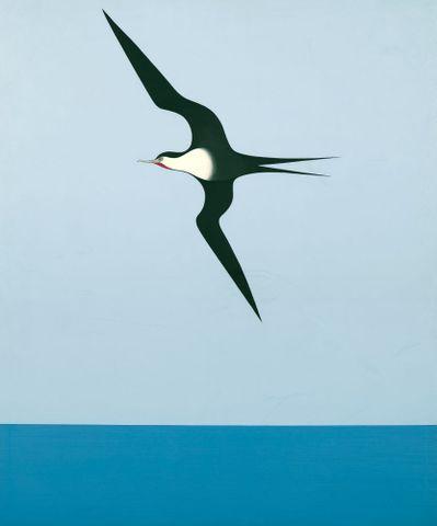 Pacific frigate bird